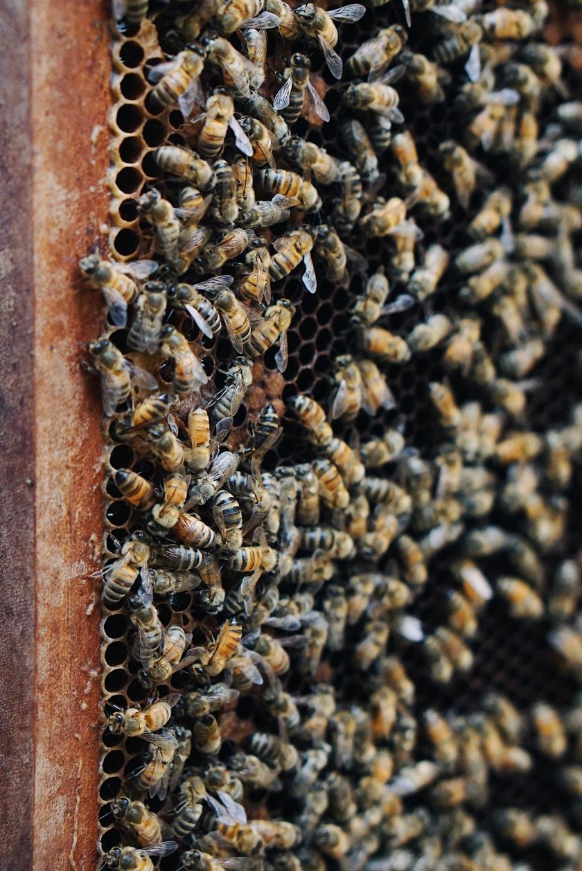 eat-and-explore-bohol-bee-farm
